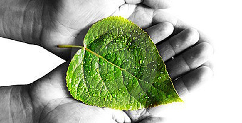 Green renovation is budget friendly, and cost effective, as represented by this leaf.